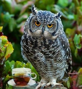 owlstacheteatrend