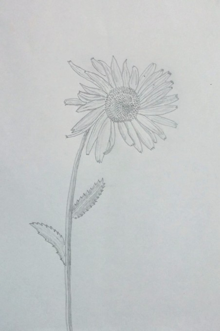 hand drawn daisy