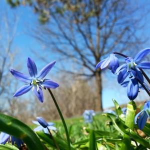 spring blooms1