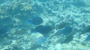 Caleton Beach fish3